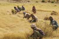 improving access to family planning can promote food security in a changing climate thumbnail